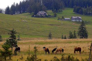Teichalm und Sommeralm bilden eines der größten zusammenhängenden Almgebiete der Alpen. Es liegt rund 30 km nordöstlich von Graz im Grazer Bergland und gehört zu den Gemeinden Fladnitz an der Teichalm, Passail und Sankt Kathrein am Offenegg.  © Gerhard Singer
