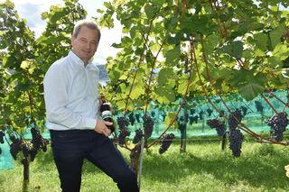 Horst Wild ist einer von sieben Stadtwinzern, die auf der Seewiese Klagenfurter Wein anbauen