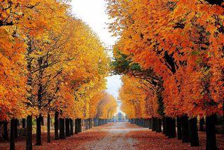 Der Herbst hat wie alle anderen Jahreszeiten seine eigene Farbe, seinen Duft, seine Atmosphäre, seine Temperatur, sein Licht, seine Eigenheit, seine Aufgabe.© Gerhard Singer