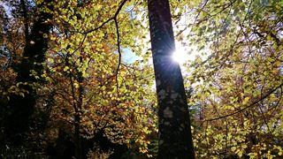 """""""Der Herbst ist des Jahres schönstes farbiges Lächeln."""" Willy Meurer"""