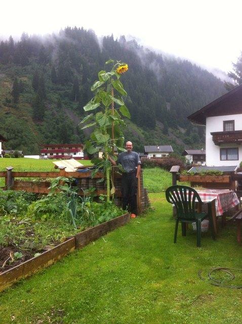Werner neben der Riesensonnenblume