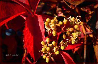 Die Natur bringt Herbst und Frühling durcheinander