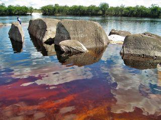 """Das """"Schwarzwasser"""" eines Flusses in Venezuela in der Außen-Ansicht. Es beheimatet einige sehr interessante Fisch-Arten für die Aquaristik..."""