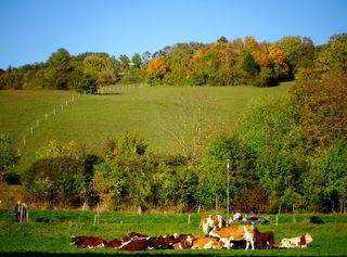 Kühe genießen das Wetter in der Stegleiten.