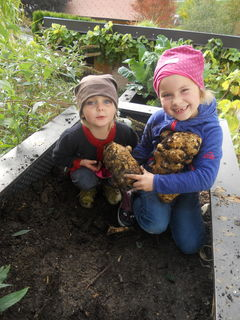 Beeindruckt waren Nora Kitzberger und Helene Ganser von einer  zwei Kilo schweren Riesenkartoffel,  die sie im Garten von Noras Mutter Irene in Kasten ernteten.