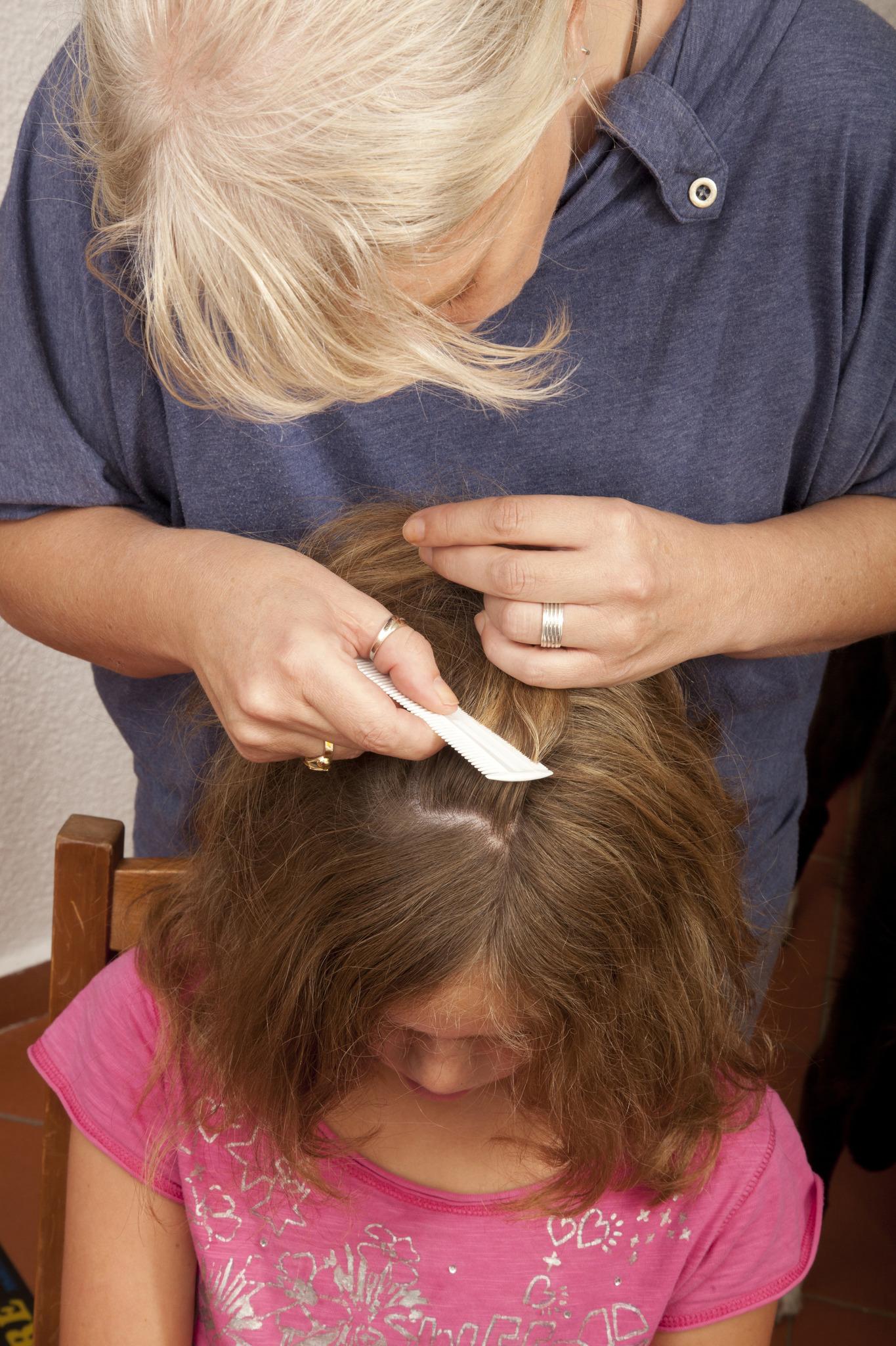 Kopfläuse Schnell Und Effektiv Bekämpfen Braunau