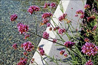 Da sind mir beim Krematorium diese Blumen und ihr Schwärmer begegnet...es war fast noch Sommer.