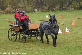 Ein Noriker-Pferd fuhr bei den Vereinsmeisterschaften der Pferdefreunde Rabnitztal mit.