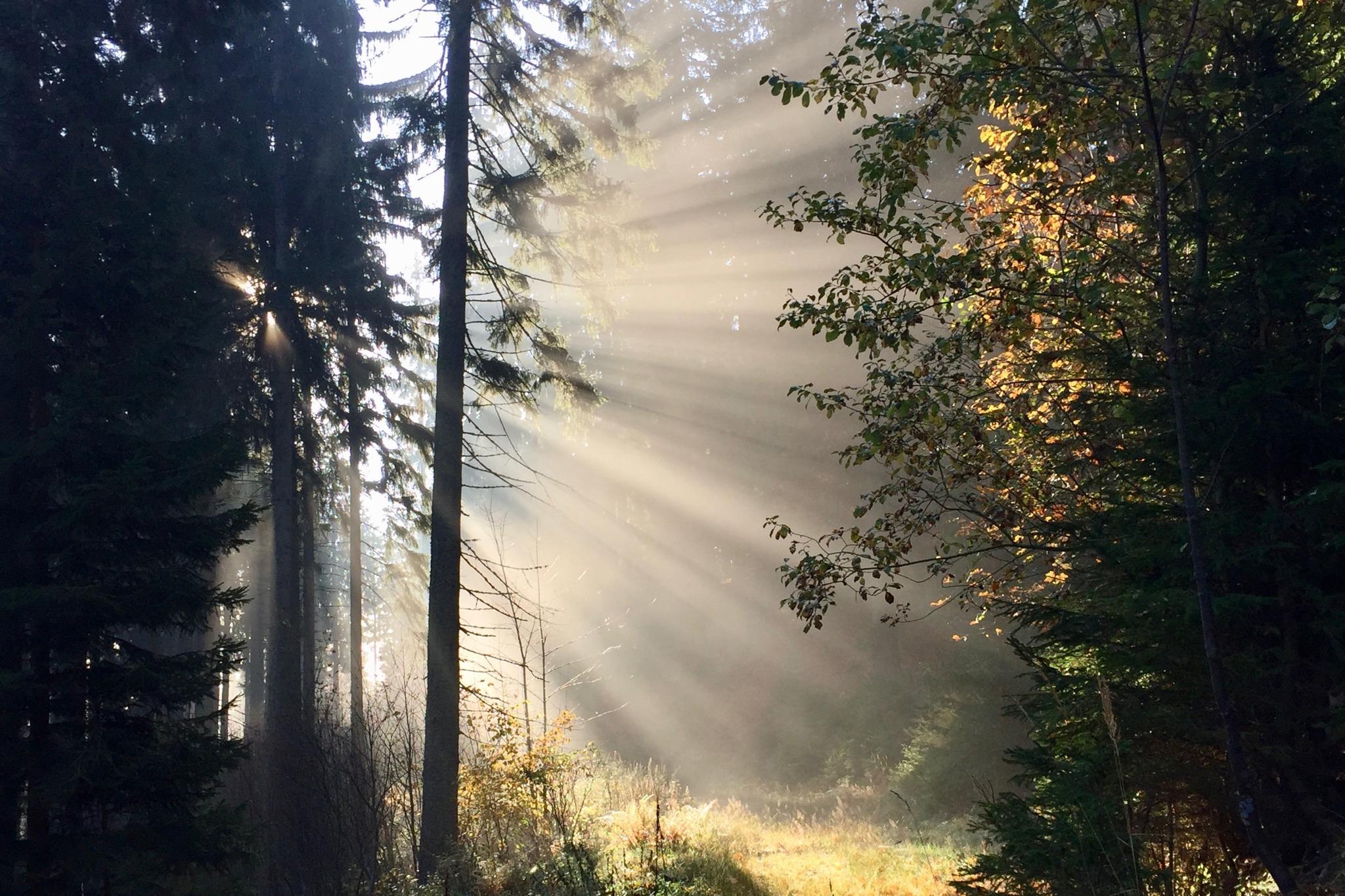 Der Letzte Schöne Herbsttag