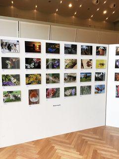 Bei den Frohnleitner Kunsttagen wurde eine Auswahl von Bildern unserer Regionauten ausgestellt.