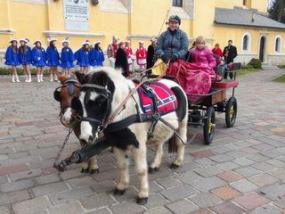 Königliches Gespann für das Prinzenpaar gezogen von Shetland-Ponys.