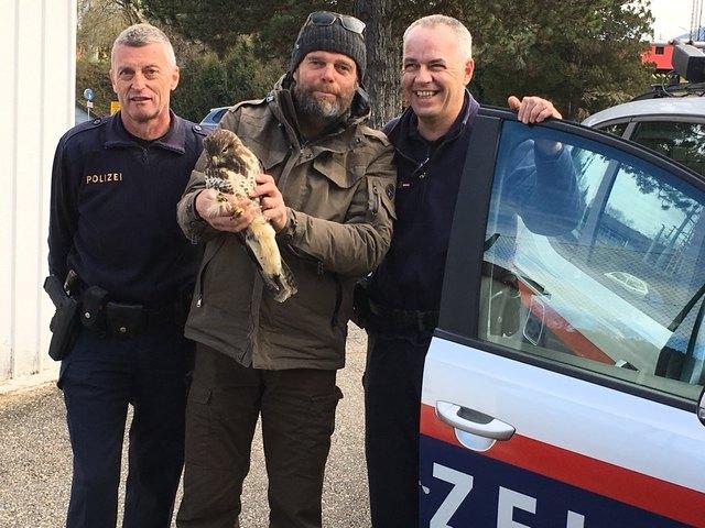 Kontrollinspektor Gfrerer, Falkner Schüttelkopf mit dem verletzten Mäusebussard, Gruppeninspektor Macheiner.