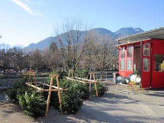 Beim FF-Gerätehaus direkt neben dem Bad Ischler Bahnhof werden wieder Christbäume verkauft.