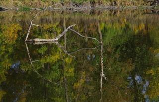 Spiegelung am Teich im Naturschutzgebiet Marchauen/Marchegg,