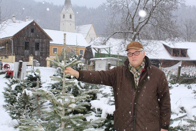 Herr über die Christbäume in St. Donat: Veit Prettner