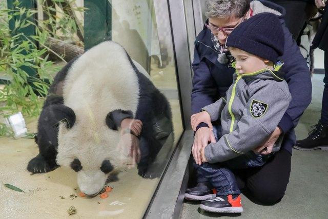 Thimo möchte einen Pandabären streicheln.