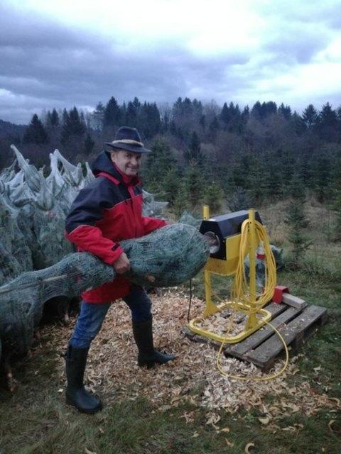 Albin Offner ist seit 30 Jahren Christbaum-Produzent