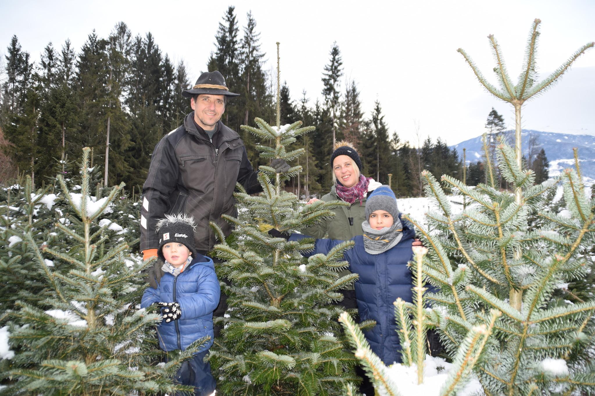 Weihnachtsbaum Selber Schneiden.Kleinedling Lavanttaler Fällen Ihren Christbaum Selbst Wolfsberg