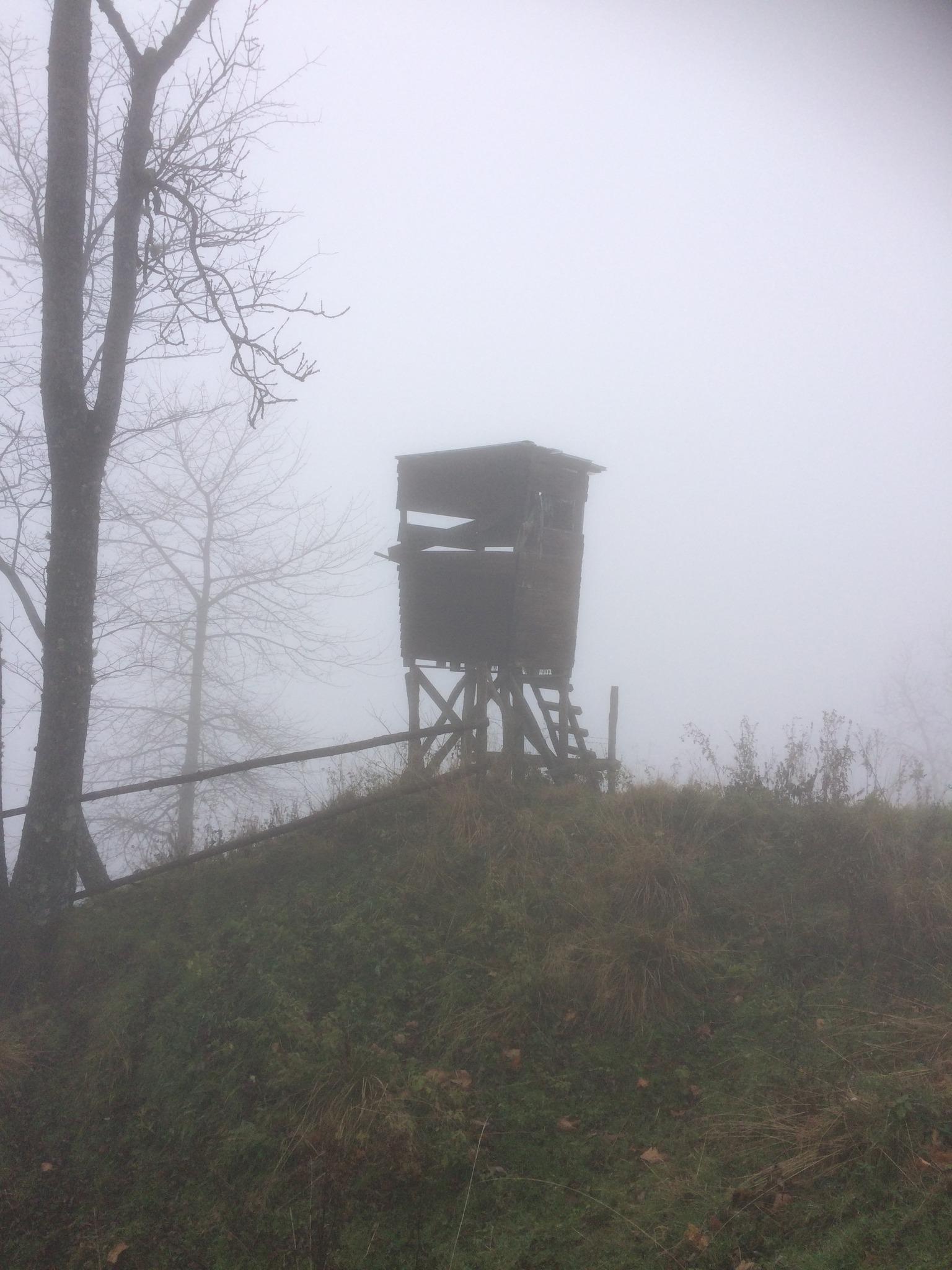 Hochsitz Im Nebel Feldkirchen