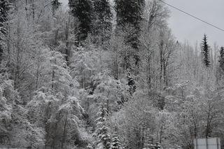 Herrlich dieser angezuckerte Wald...