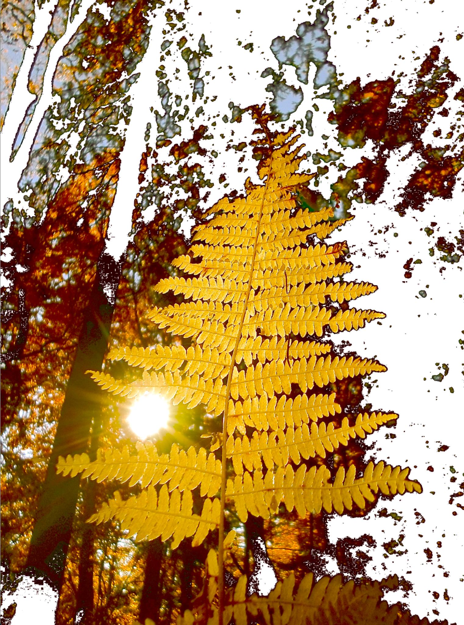 Bilderbuch Tannenbaum.Der Tannenbaum Oberwart
