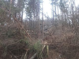 Schäden auf der B82 zwischen Eberndorf und Miklauzhof