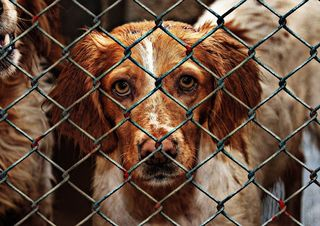 An Private und Vereine wurden erstmals der Kärntner Tierschutzpreis vergeben