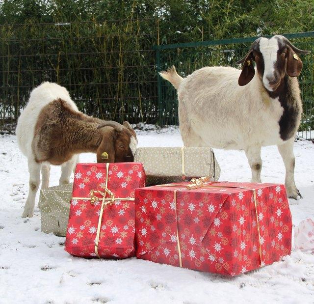 Im Zoo kann man Weihnachtsüberraschungen für Tiere basteln.