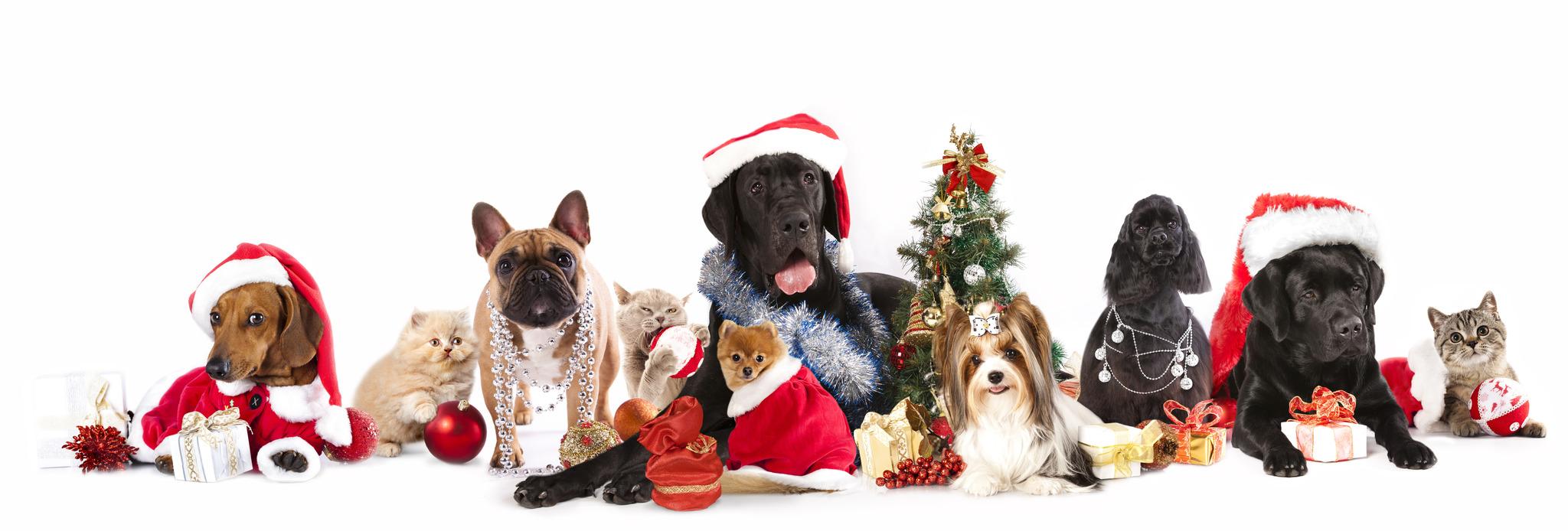 Haustiere sind keine Weihnachtsgeschenke\