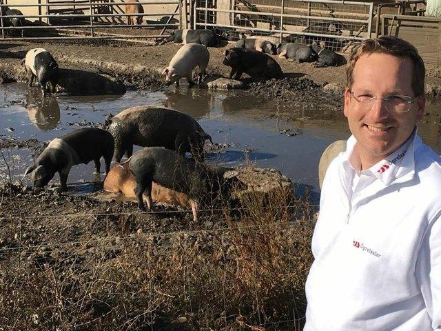 Gründer Peter Comhaire bei den Wühlschweinen von Biohof Harbich.