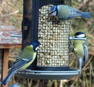 Bitte gerade jetzt in der kalten Jahreszeit unsere Wildvögel fleißig FÜTTERN!!!  Lieblingsspeise der Blaumeisen sind z. B. geschälte Erdnüsse und Sonnenblumenkerne!