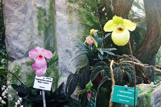 Orchideen hinter Glas