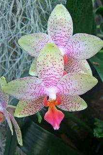 Blütenpracht der Orchideen