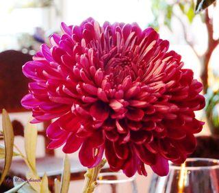 Die Blume ist das Lächeln der Pflanze! :-)) Peter Hille (1854 - 1904)