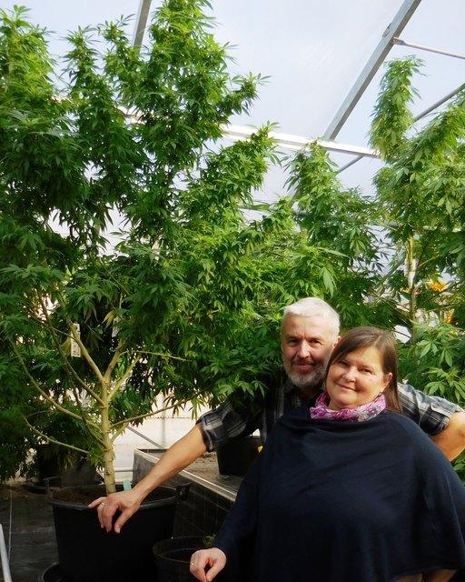 Walter und Monika Stockenhuber werden in Engelhartszell über Cannabis als Medizin informieren – geführt auf Vereinsbasis.