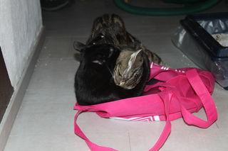 Luna und Hazel im Streit um die Hofertasche