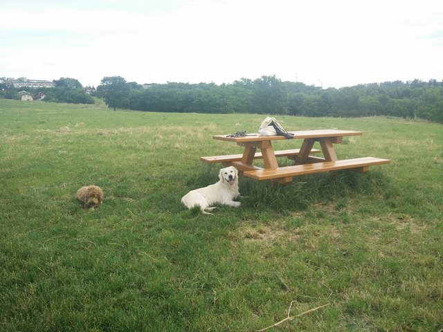 Wer seine Hunde frei laufen lassen will, kann das zum Beispiel im Nachbarbezirk Favoriten auf der Heuberggstätten tun.