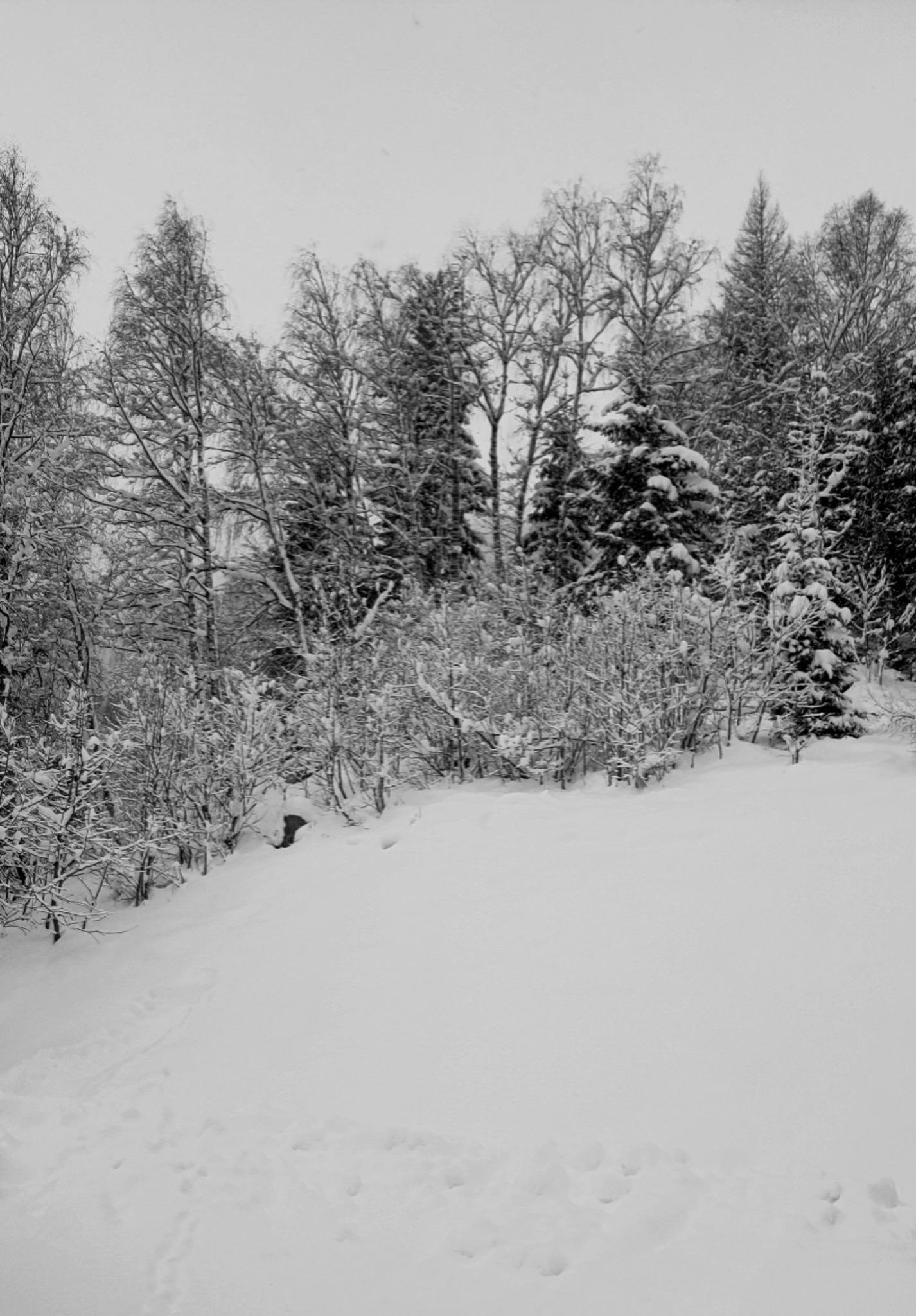 Der Winter Malt Schwarzweiß Lungau