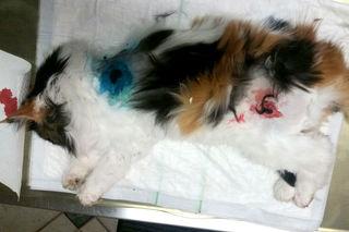 """Mit diesen schweren Verletzungen wurde """"Mutzi"""" aufgefunden."""