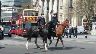 In London sind laut Homepage der dortigen Polizei neun Pferde im Dienst der Polizei.