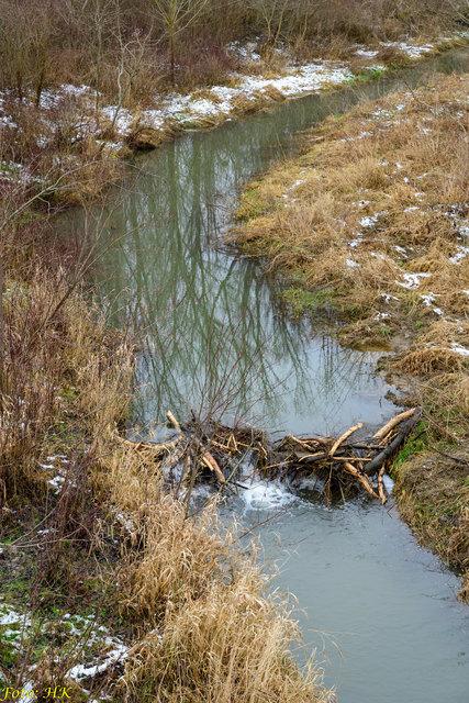 ...hat hier am Senningbach einen Staudamm errichtet