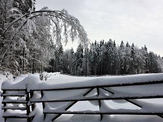 Traumhafte Winterlandschaft gibt es zur Zeit nicht nur rund um den Dobratsch, sondern in ganz Kärnten!