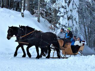 Gibt es etwas schöneres, als eine Pferdeschlittenfahrt in tiefster Winterlandschaft am Fuße des Dobratsch von Heiligengeist zum Almgasthof Hundsmarhof?