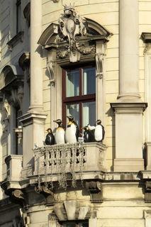Ziemlich ausdauernd, die befrackten Gesellen auf dem Balkon!