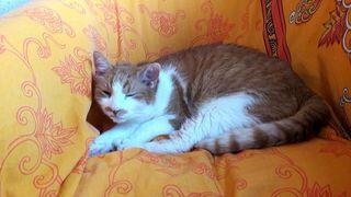 Auch Katzen können verschlafen drein schauen :-)