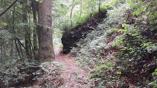 Romantische Waldwege