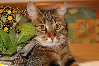 Danke allen, die mir ihre Katzenbilder zur Verfügung stellten.