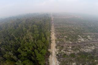 Die Folgen des Anbaus von Ölpalmen: Regenwaldrohdung in Indonesien.