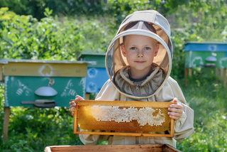 Die Bienen vom Lagerhaus suchen ein Sommerquartier.
