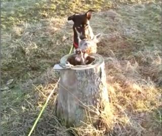 Ein Hund stöberte drei abgetrennte Reh-Häupter in einem Baumstumpf auf.